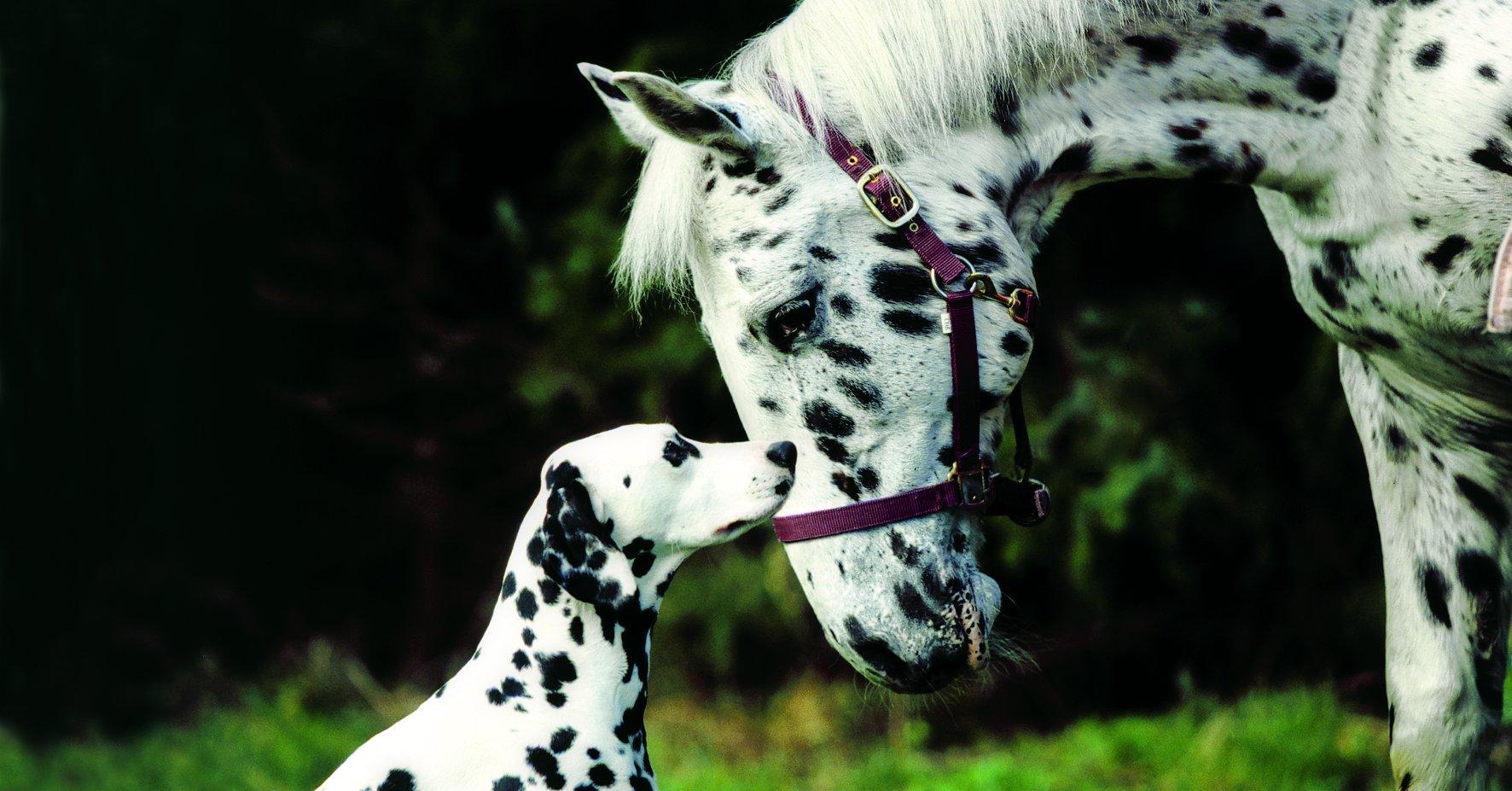 hund und pferd 2021  die tiermesse in den westfalenhallen