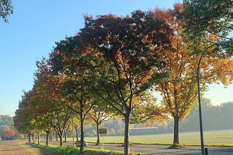 Colourful leaves on trees on an avenue in Dortmund's suburb Bövinghausen.