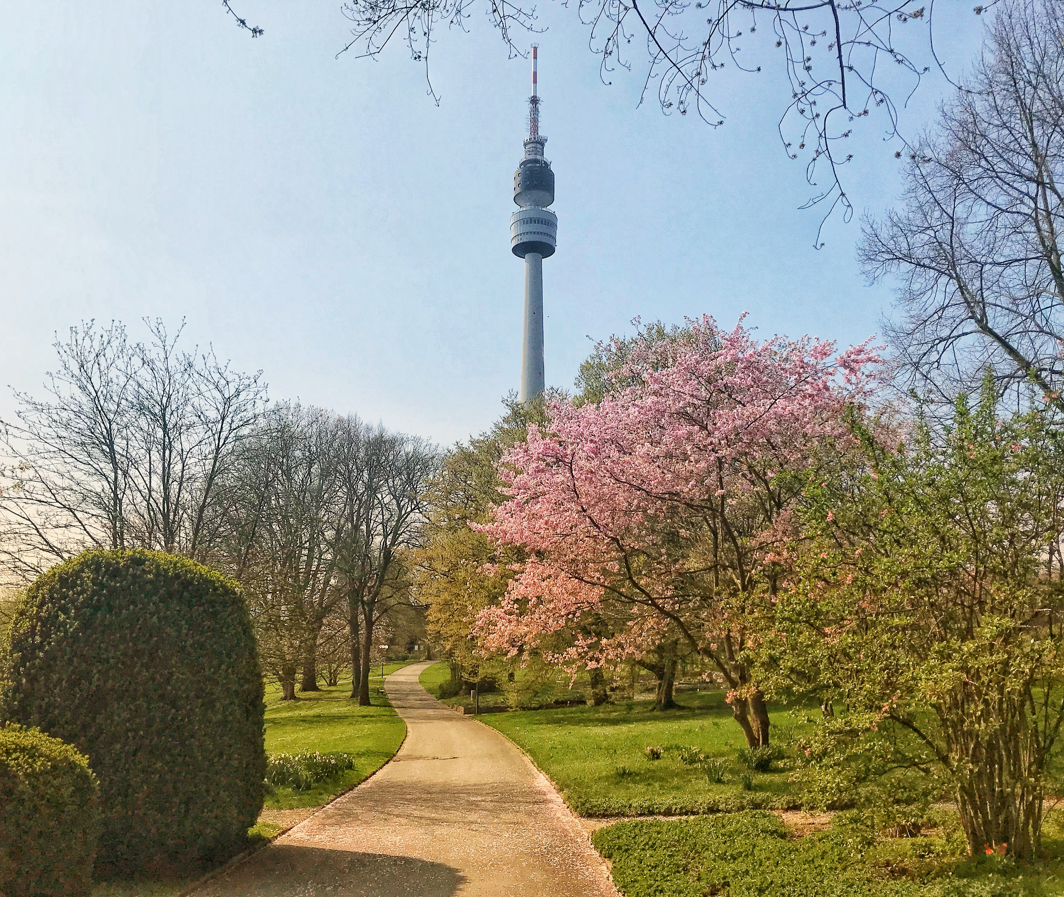 "Blooming trees in the Westfalenpark in front of the TV-Tower ""Florian""."